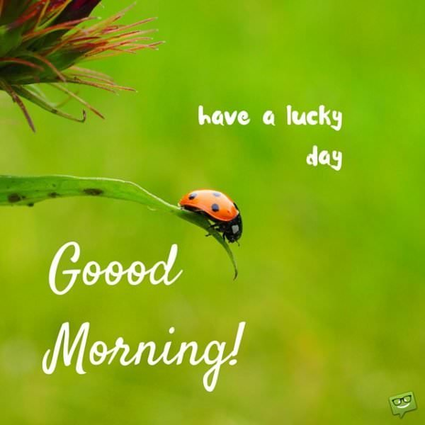 Good morning! Have a lucky day!