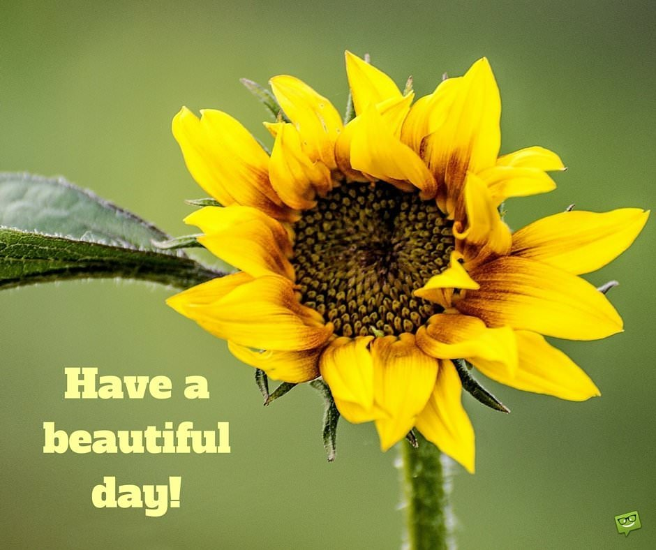 Good Morning Sunshine Have A Beautiful Day : A wish for the new day good morning