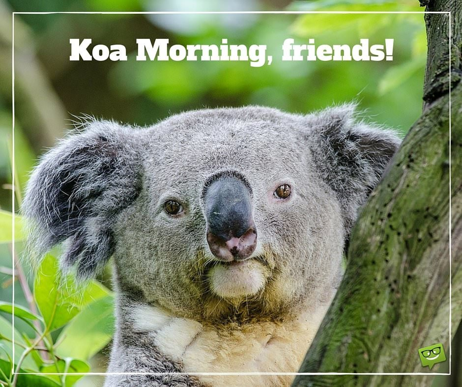 Koa Morning, friends!