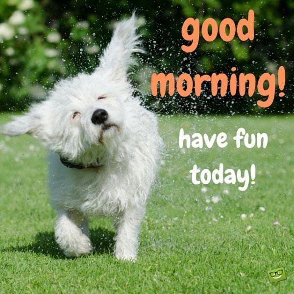 good morning image with cute dog.