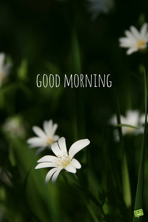 Good Morning Quotes With Flowers : A wish for the new day good morning