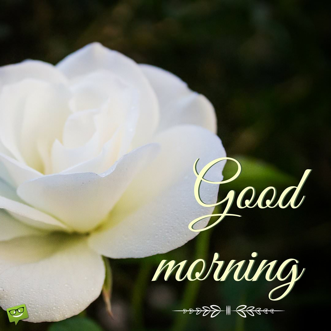 Good Morning White Flowers Images Hd Babangrichie