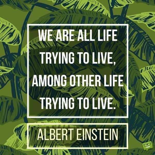 We are all life trying to live, among other life trying to live. Albert Einstein.