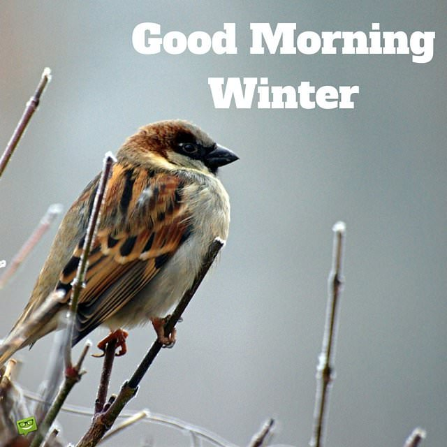 Hello, Winter! Quotes and Images to Share