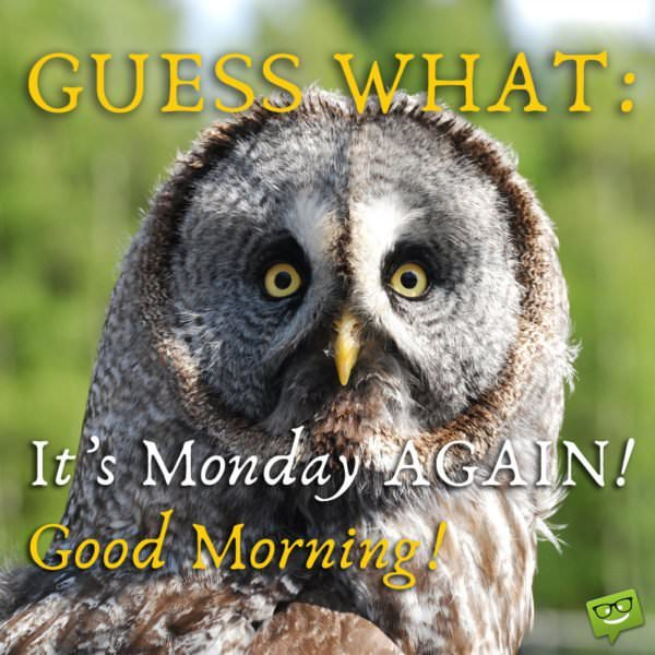 Guess what! It's Monday AGAIN! Good Morning!