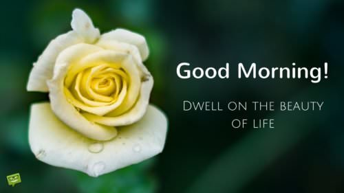 Good Morning! Dwell on the beauty of life!