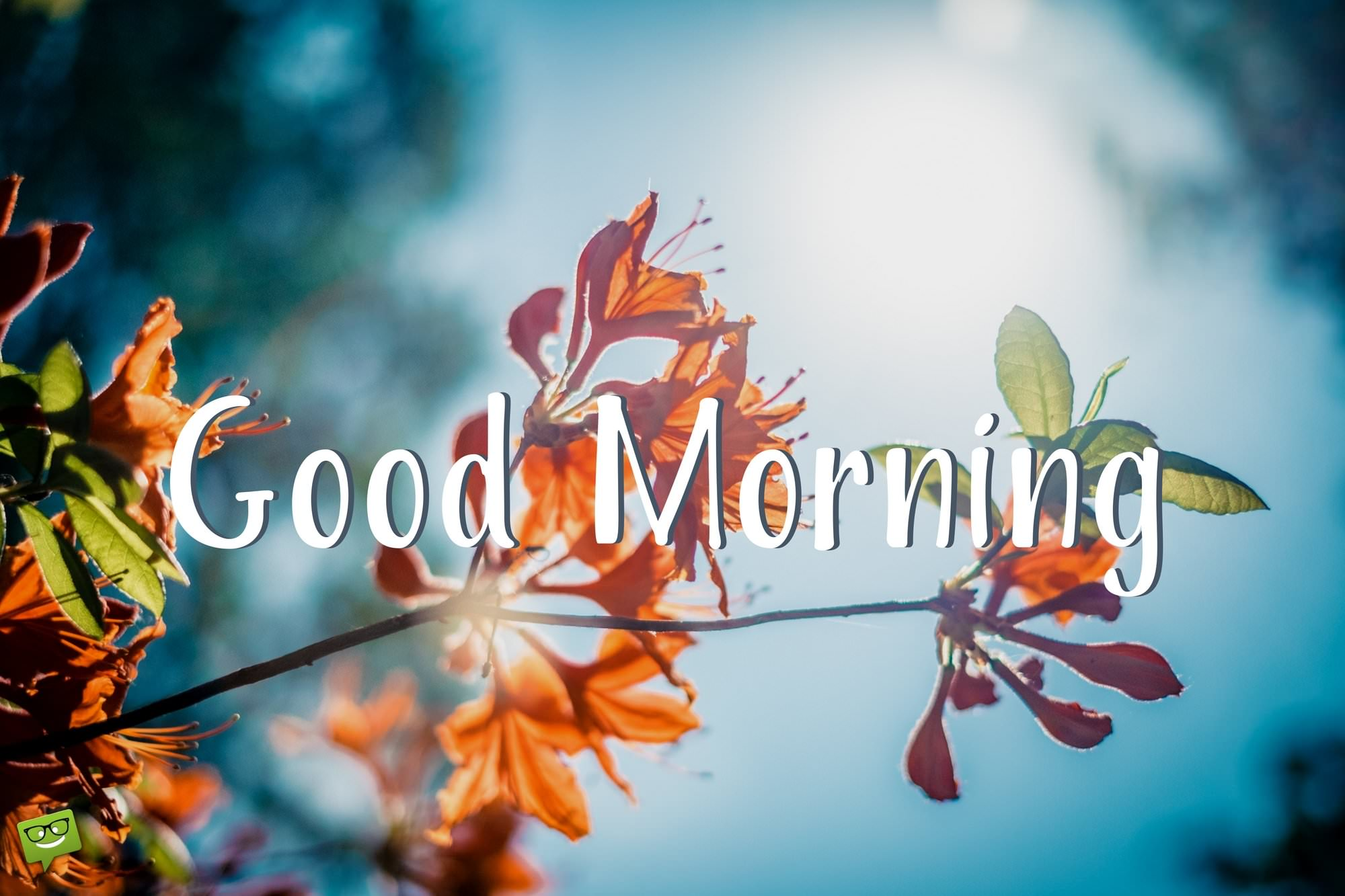 Wake Up Seize The Day Positive Good Morning Quotes