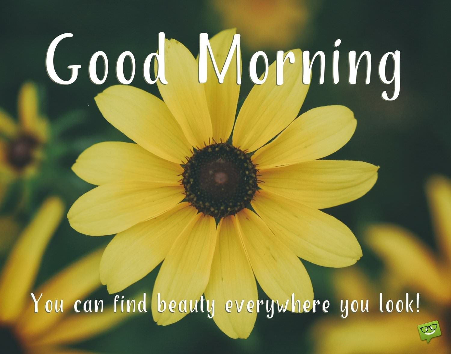 Yellow Flowers Quotes Gallery Flower Decoration Design Image Collections
