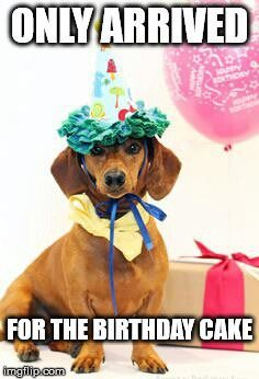 Super Funny Birthday Dog Cake Meme Personalised Birthday Cards Veneteletsinfo