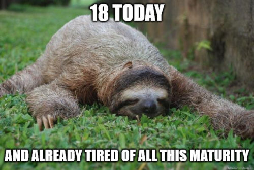 Sloth birthday meme