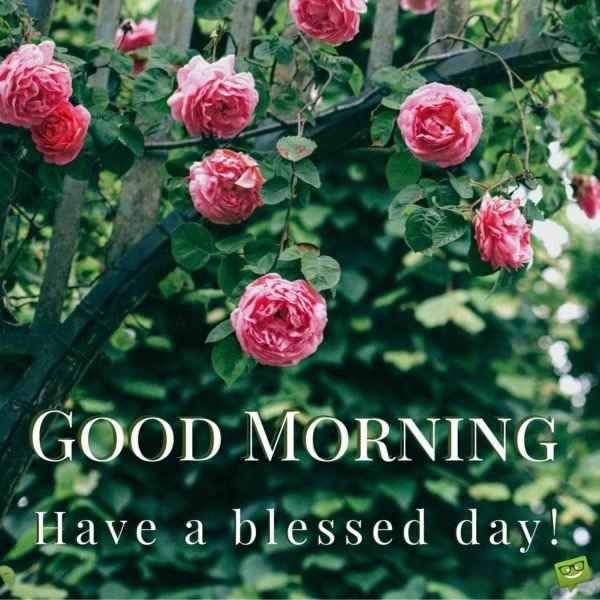 Good Morning. Have a blessed day!