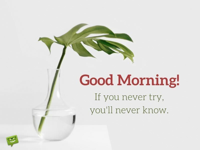 Good Morning. If you never try you'll never know.