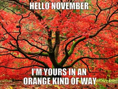 Hello, November. I'm yours in an orange kind of way.