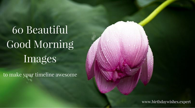 60 Good Morning Images With Flowers
