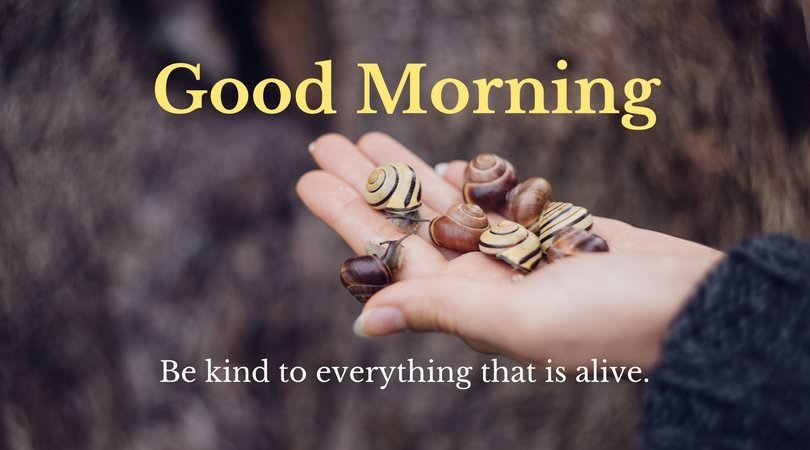 Good Morning. Be kind to everything that is alive.