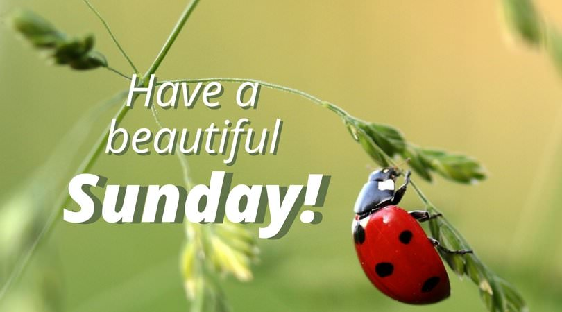 A Sunday Well Spent | Happy and Inspirational Sunday Quotes