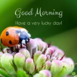 Good Morning. Have a very lucky day!