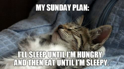 My Sunday plan: Sleep until I'm hungry and then eat until I'm sleepy.