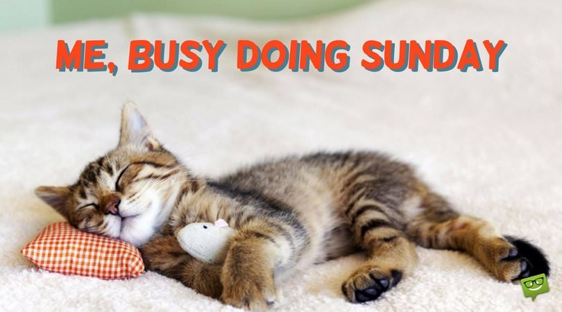 Me, busy doing Sunday