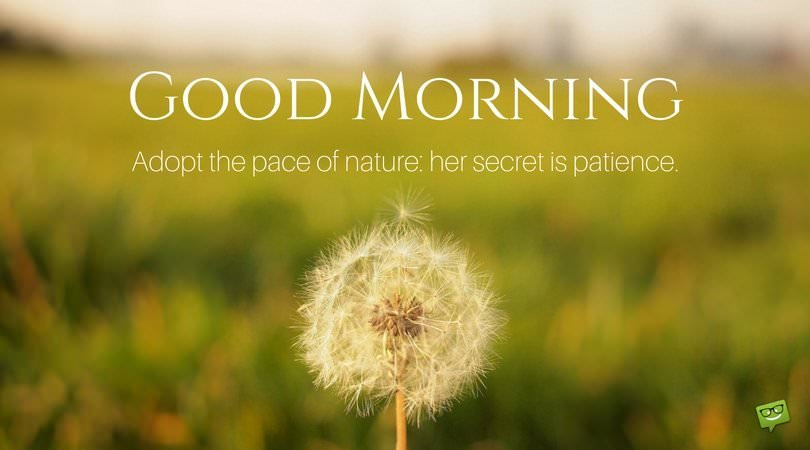 Good morning. Adopt the pace of nature, her secret is patience.