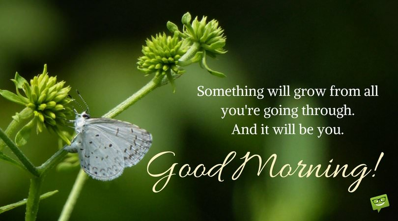 Something will grow from all you are going through, and it will be You! Good Morning.