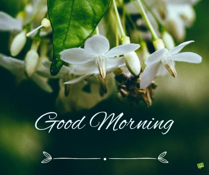 Good Morning Instagram World We Are Here Bright: Uplifting Good Morning Quotes To Start On The Bright Side
