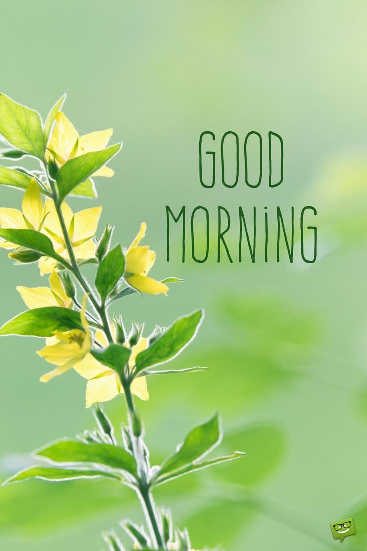 Good morning have a wonderful day images
