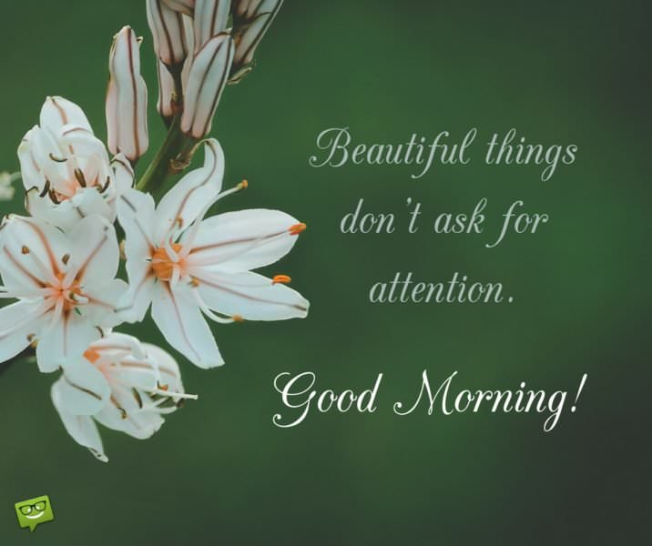 Beautiful things don't ask for attention. Good morning!
