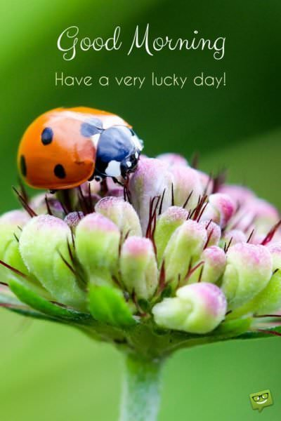 Good Morning. Have a lucky day.