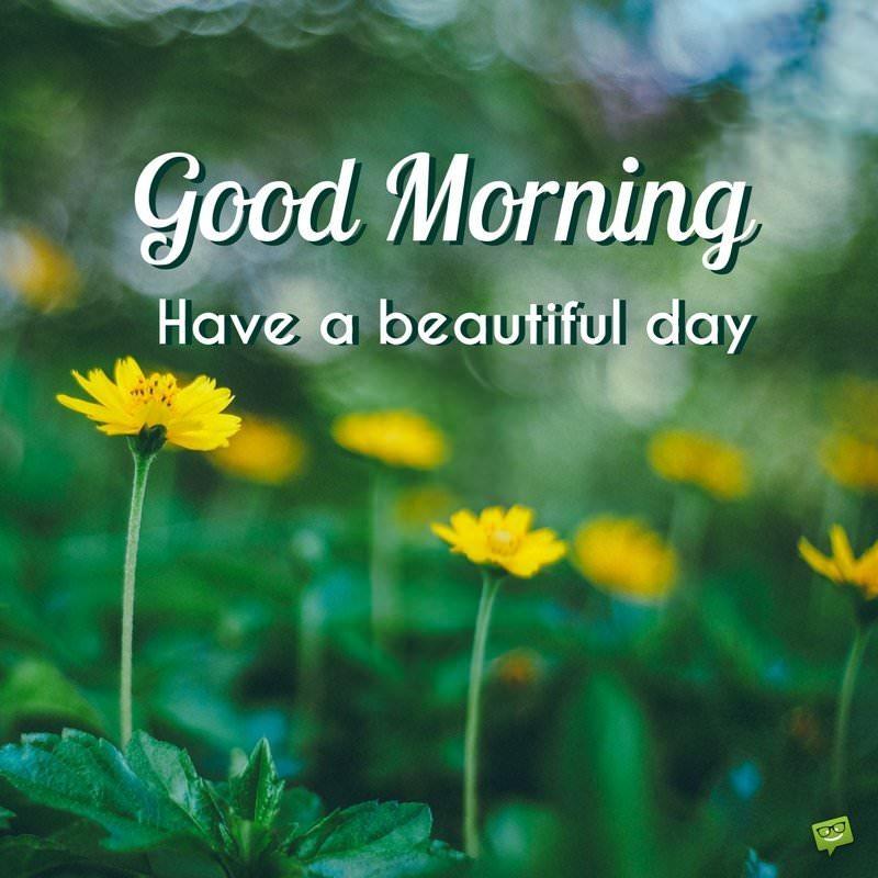 Good Morning Yellow Flowers 21