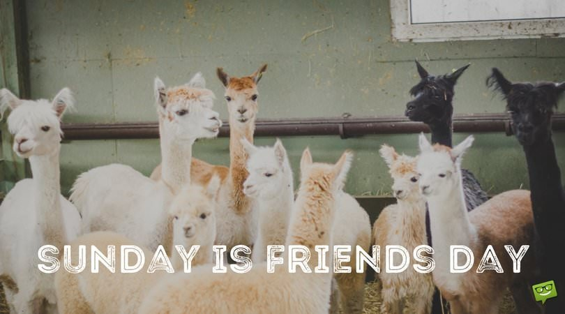 Sunday is friends day.