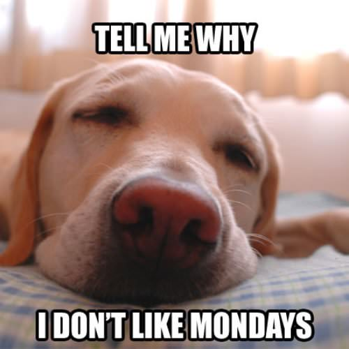 Tell me why I don't like Mondays.