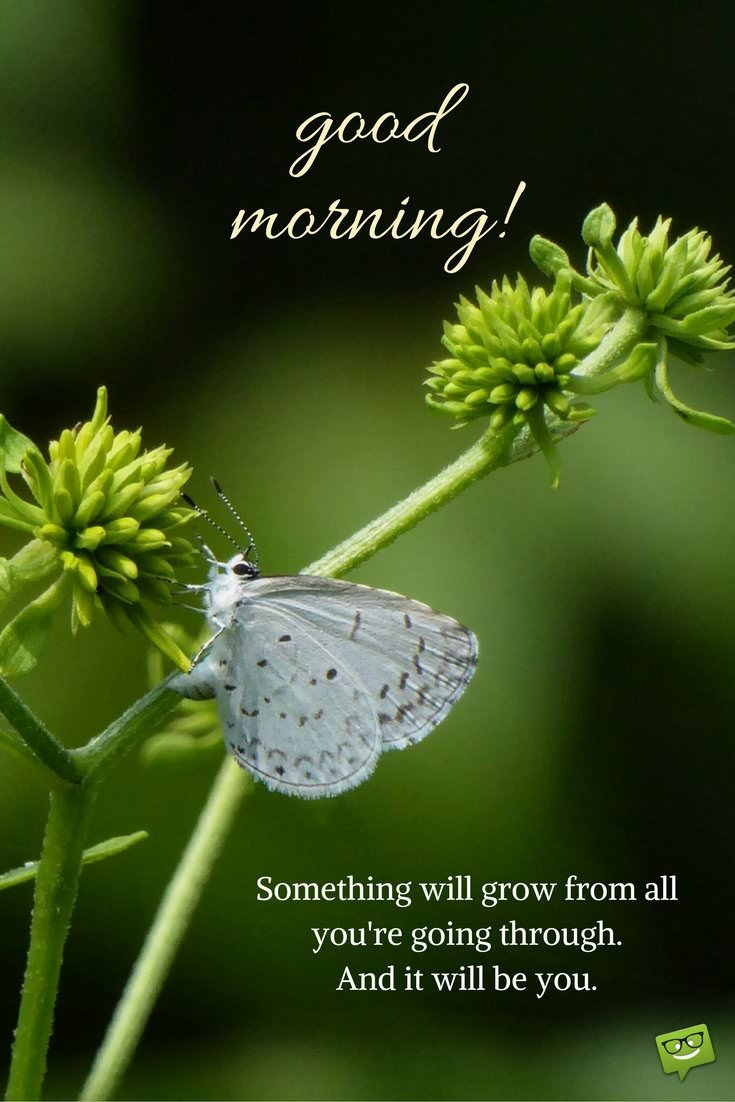 Good Morning Picture For Pinterest With Butterfly And Quote