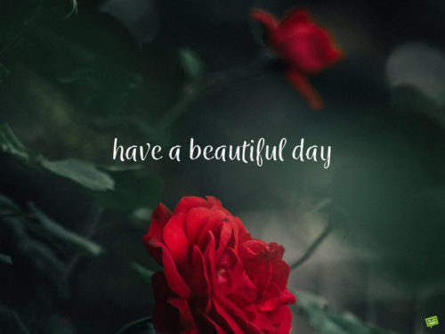 Have a beautiful day.