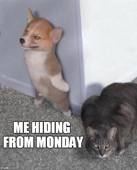 Me Hiding From Monday Funny Monday Meme With Cute Animals