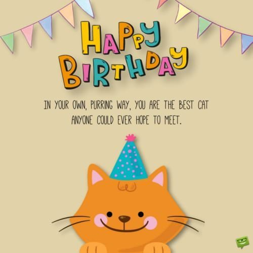 Happy Birthday! In your own, purring way, you are the best cat anyone could ever hope to meet.