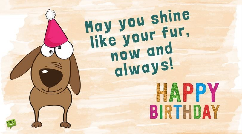 May You Shine Like Your Fur Now And Always Happy Birthday