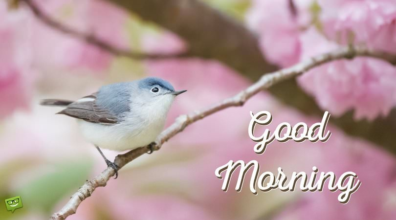 Friends For A Flying Start Good Morning Pictures With Birds
