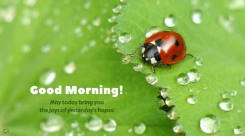 Good morning! May today bring you the joys of yesterday's hopes!