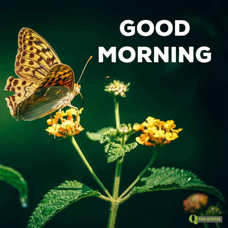 Good Morning Images With Butterflies Good Morning With Butterfly