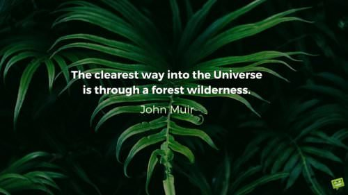 The clearest way into the Universe is through a forest wilderness. John Muir.