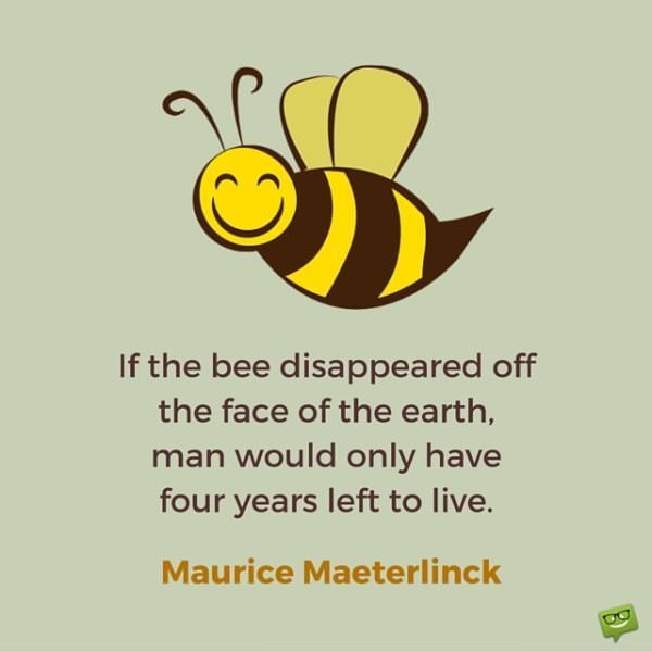 If the bee disappeared off the face of the earth, man would only have four years left to live. Maurice Maeterlinck