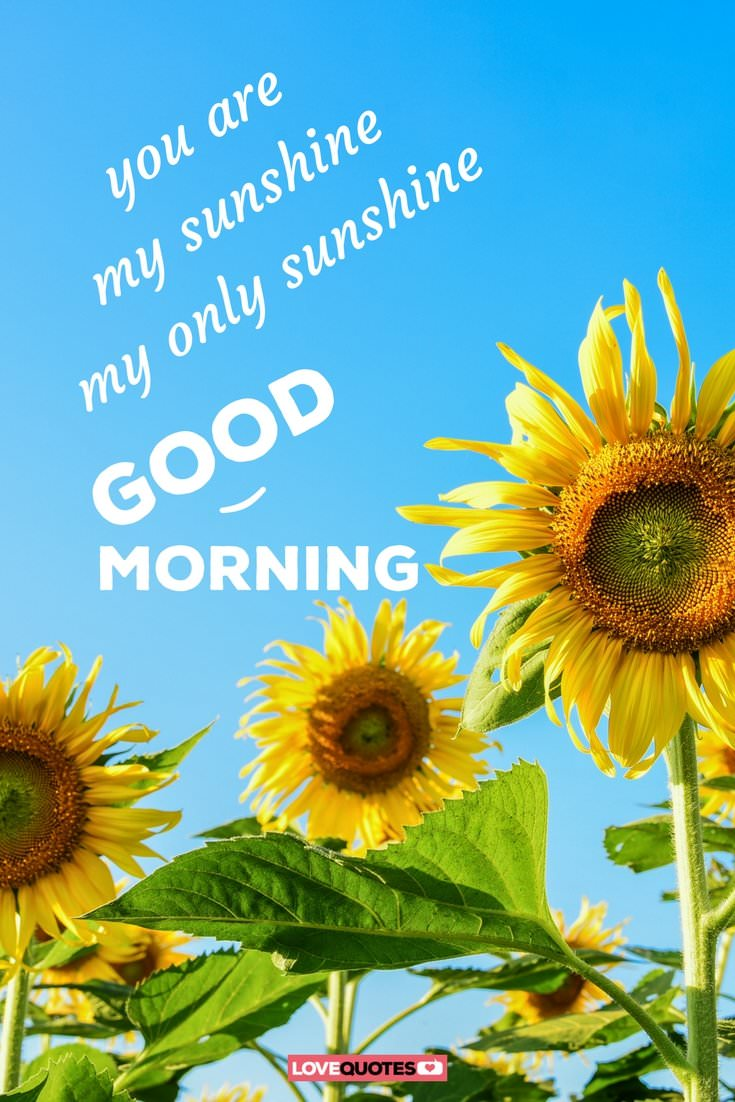 Good Morning Sunshine My Only Sunshine : Of the most popular good morning quotes for your love