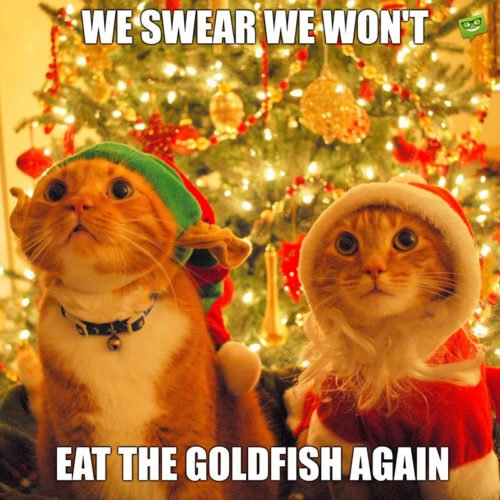 We swear we won't eat the goldfish again.