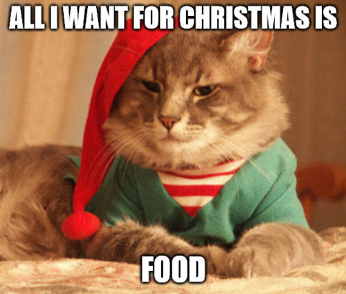 all i want for Christmas is food - funny cat Christmas meme.