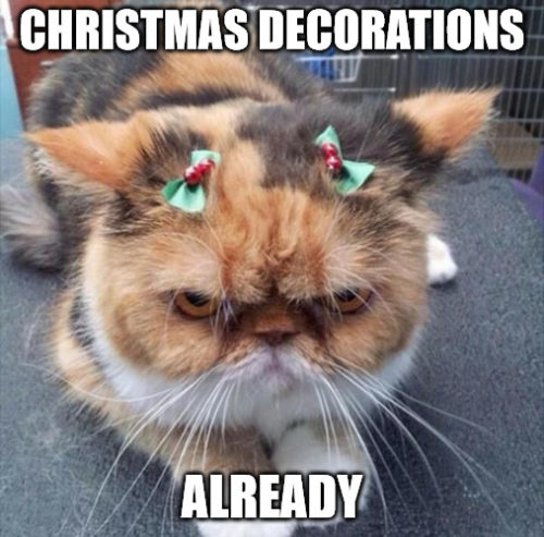 Grumpy cat Christmas meme - Christmas decorations already.