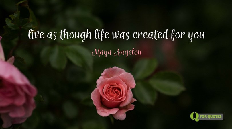 101 Maya Angelou Quotes (That Will Make You Feel Warm Inside)
