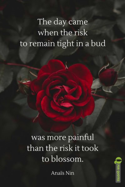 The day came when the risk to remain tight in a bud was more painful than the risk it took to blossom. Anaïs Nin