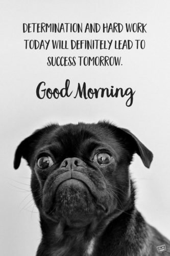 Determination and hard work today will definitely lead to success tomorrow. Good Morning.