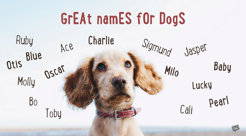 100 Great Names for Dogs and Why Pick Them